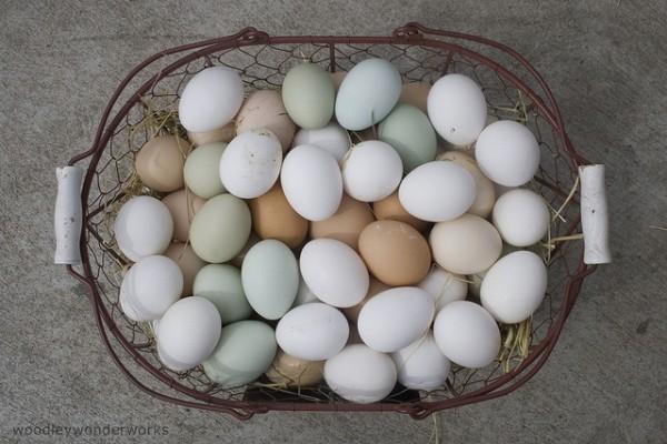 Chicken eggs. Photo by Flickr user, woodleywonderworks.